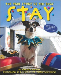 book cover: stay the true story of ten dogs