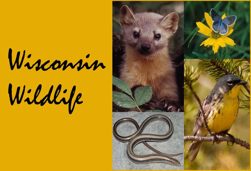Wisconsin Wildlife