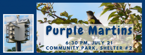 Purple Martins Wednesday, July 21, 2021 from 6:30 - 7:30 pm. Belleville Community Park, shelter #2, Bross Circle
