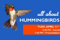 All About Hummingbirds, Tuesday April 11th. 6:30 pm social, 7:00 pm presentation